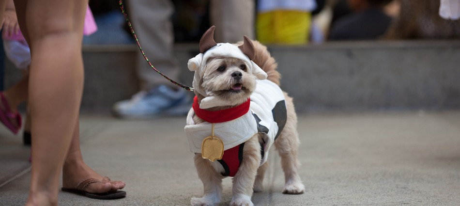 Ward Pet Costume Contest (31 images)